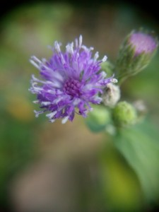 Bunga Rumput